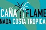 la_caña_flamenca_2020_267
