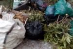 Residuos de poda 1_267