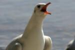 Avistamiento de aves_267