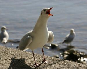 Avistamiento de aves_800
